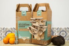 Back to the Roots Gourmet Mushroom Kit