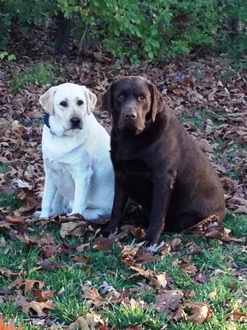 Meet Harley & Nala