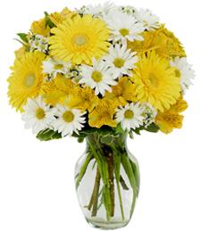 Yellow and White Daisy Mix